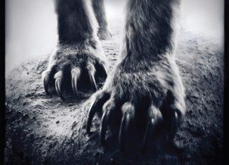 SHEARWATER - Animal Joy (2012)